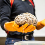 Psychology Behind Conversion Optimization