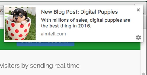 IMAGE_3_digital_puppies